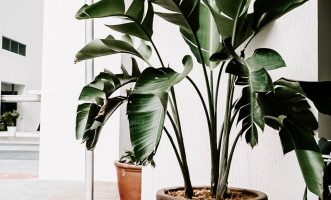 Plant in woonkamer